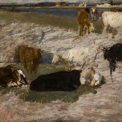Etude de vaches pour le marais